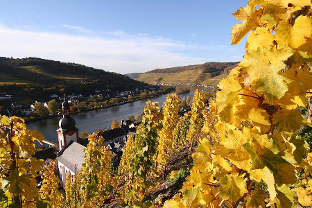 Experience the Moselle Valley at Harvest Time on an AMA Waterways cruise!