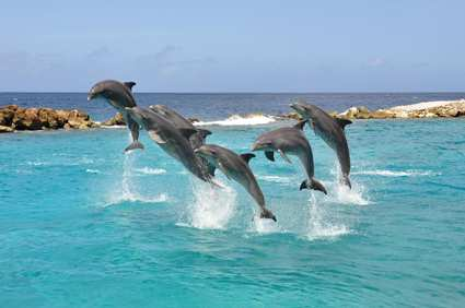 Dolphin Academy at Hilton Curacao Resort & Spa